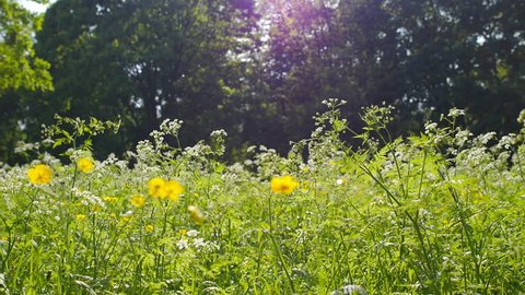 Meadow with flowers during spring. Video footage of meadow with flowers during spring.