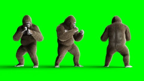 Funny brown gorilla fighting. Super realistic fur and hair. Green screen 4K animation.
