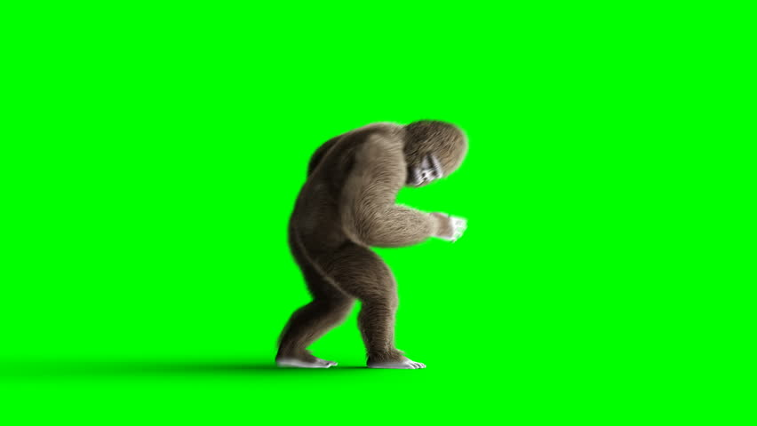 Funny brown gorilla dancing. Super realistic fur and hair. Green screen 4K animation. | Shutterstock HD Video #1014841312