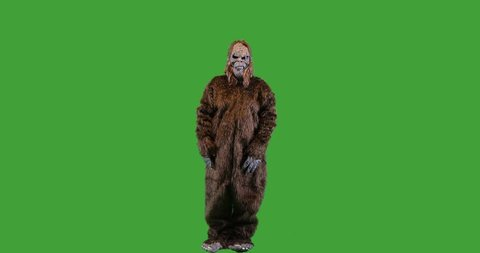 Bigfoot or Sasquatch creature looking and gesturing right on green screen.