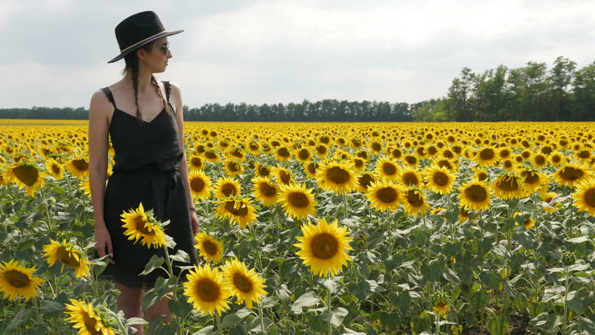 Woman in a black dress and a hat goes among the sunflowers