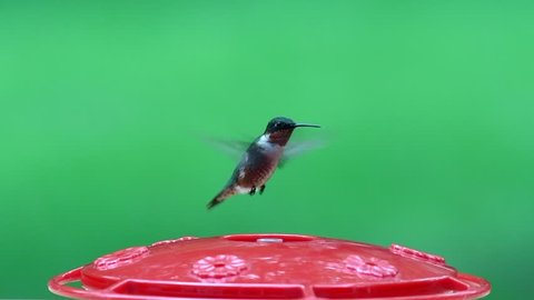 Male ruby throat hummingbird at feeder slo-mo with a shallow depth of field and copy space