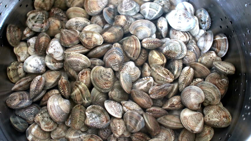 """Time lapse of a bunch of clams in the salt water. Clams """"lupini"""" type ready to be cooked moving in time lapse opening and closing the shell. fresh raw clams fished in the sea"""