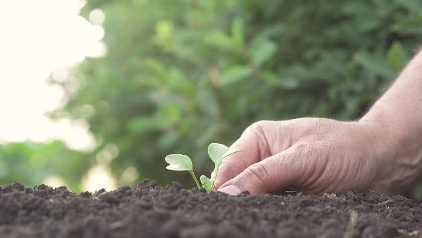 Man planting seedling in garden | Shutterstock HD Video #1015582702