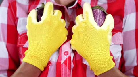 close-up, female farmer's hands in gloves hold two freshly picked eggplants. on checkered shirt background, in studio, Healthy nutrition concept. sexual association with food