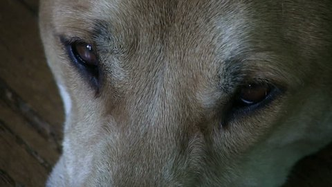 Close up of a dogs eyes