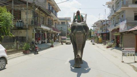 CHITWAN, NEPAL - MARCH, 2018: Asian elephant walks on the street in city.