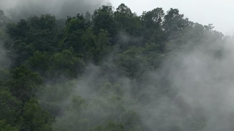 Vibrant green trees covered by fog and clouds in the Appalachian mountain range.