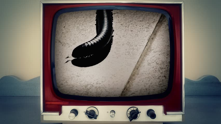 A retro vintage TV showing the movement of a centipede on the floor, a spot light over its body.  | Shutterstock HD Video #1016259262