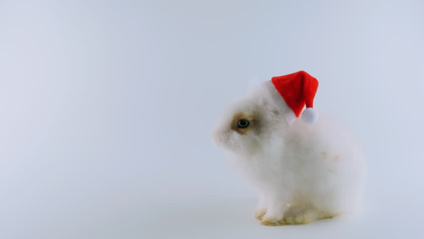 Funny white bunny in red Santa's cap, sits, looking around, sniffing, stands up on two legs, then walking away, isolated on white background, ProRes source codec, 422