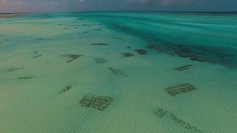Zanzibar sea weed farming
