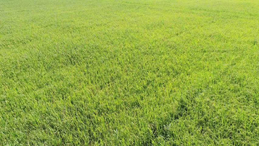 Aerial of farm. | Shutterstock HD Video #1016399542