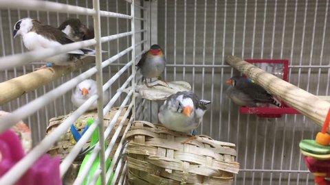 Birds in a cage in a pet shop