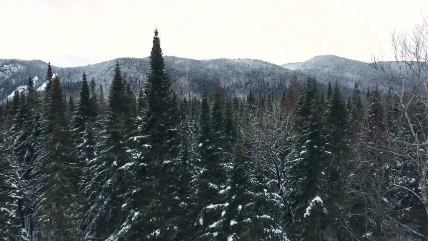 A dark coniferous forest cover with a little bit of snow. Its possible to see a line of mountains in the back. Filmed with a drone during winter in Canada.