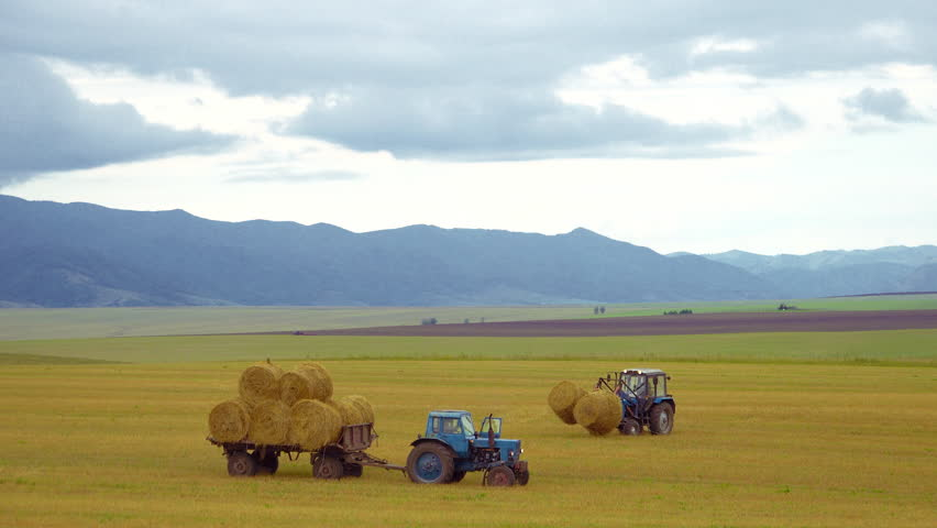 Harvesting of agricultural machinery. The tractor loads bales of hay on the machine after harvesting on a wheat field. HD