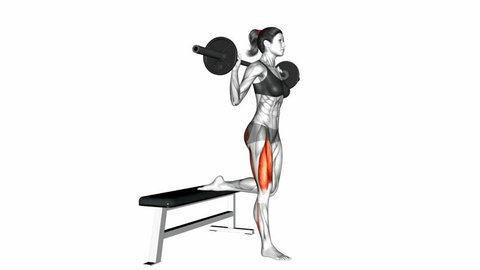 Barbell Single Leg Split Squat exercise. Anatomy of fitness and bodybuilding. Targeted muscles are red. 3d