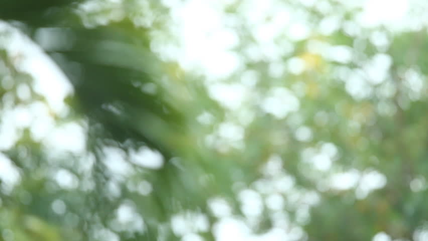 Blurred  leaves with rainning #1017271762