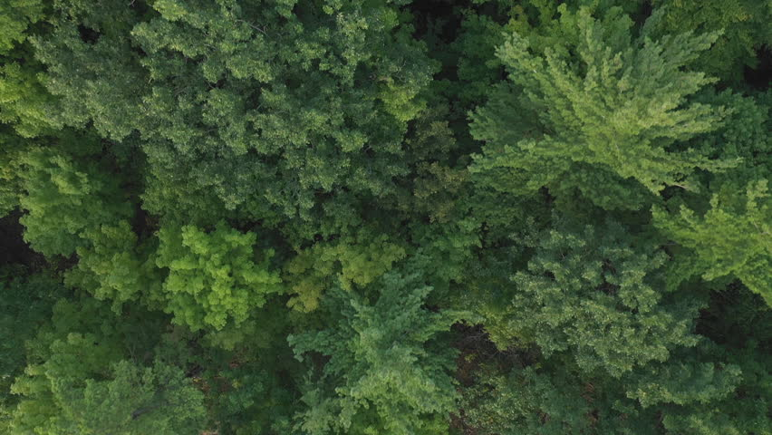 Aerial drone flight over forest of green, deciduous trees. Summer in Ontario, Canada. #1017461092