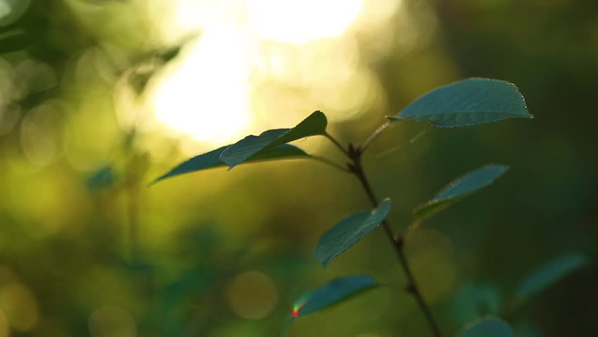 Beautiful Sunny Green Nature Background  Stock Footage Video (100%  Royalty-free) 1017472912   Shutterstock
