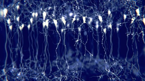 Pyramidal neurons in the cerebral cortex. They are found in the cerebral cortex, the hippocampus, and the amygdala.