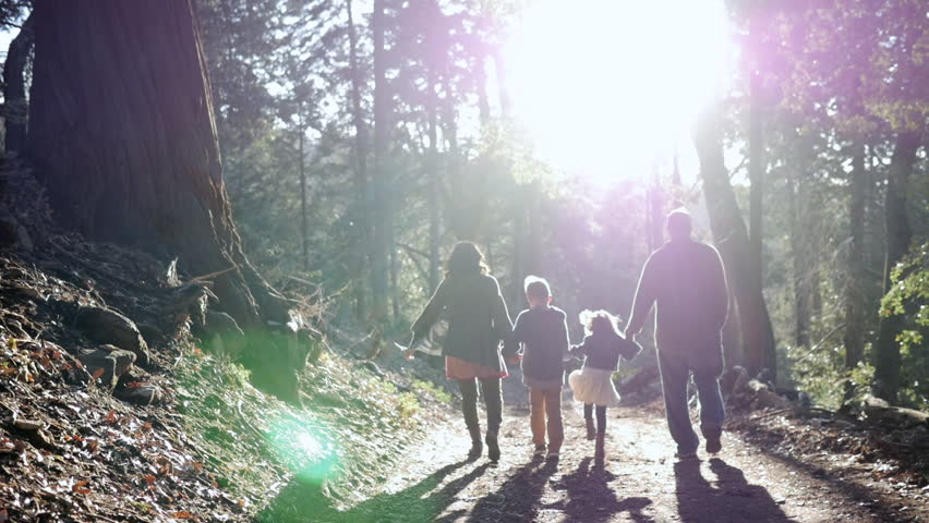 Slow motion dolly shot of family holding hands while walking on footpath in forest during sunny day