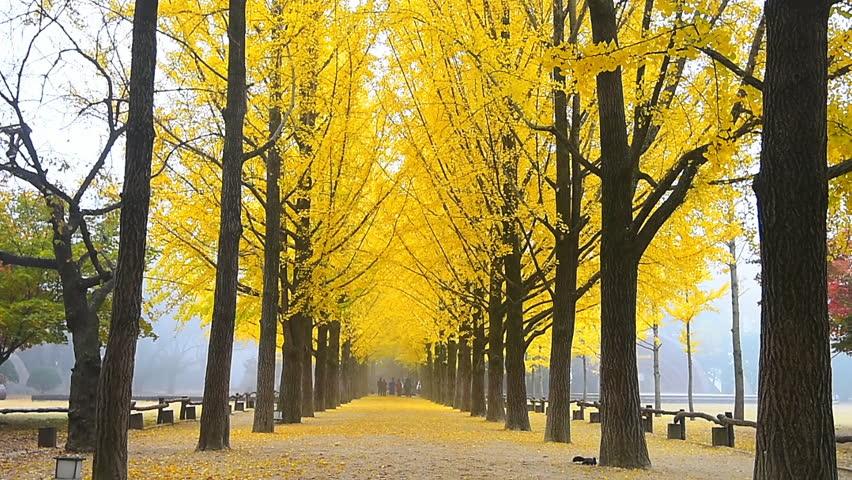 Hasil gambar untuk nami island autumn