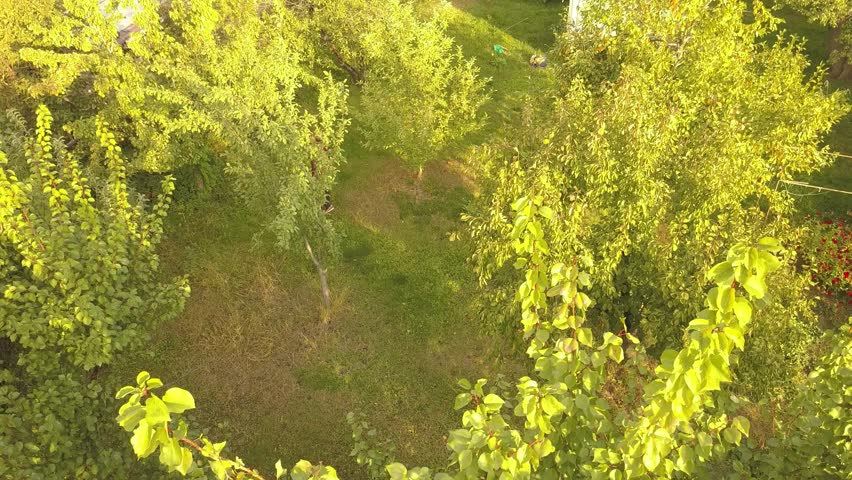 Top aerial view of young farmer walking in the garden between the trees | Shutterstock HD Video #1017857722