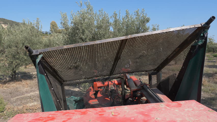 Harvesting Olives with Machine- Olive Stock Footage Video (100%  Royalty-free) 1017893062 | Shutterstock