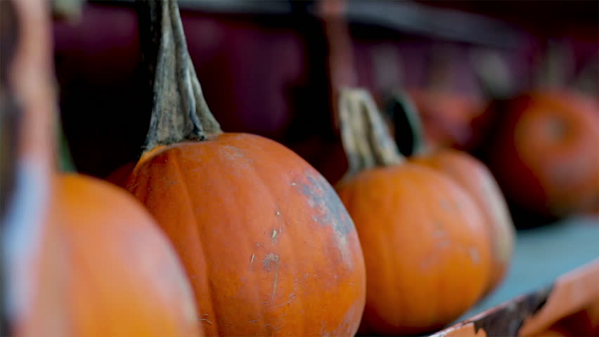 Pumpkins lined up in a row. Halloween and  Thanksgiving theme with autumn vegetable harvest. Farmers market Pumpkin patch. Seasonal gourds.  | Shutterstock HD Video #1017960472