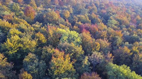 Drone shot aerial forest high angle overfly sunny colorful autumn beech forest / Drone shot aerial forest high angle overfly sunny colorful autumn beech forest