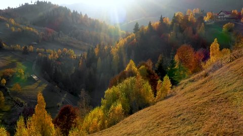 Aerial view. Mountain valley and orange larch forest woods in sunny autumn. Outdoor colorful nature landscape mountains wild fall. Autumnal forest small larch forest. Colors of fall. October forest.