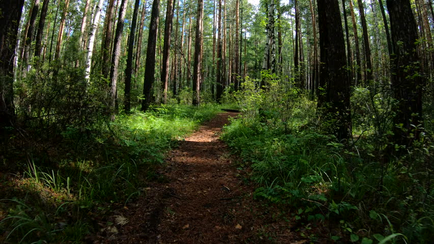 Dog or some beast running along the forest path. POV   Shutterstock HD Video #1018260592