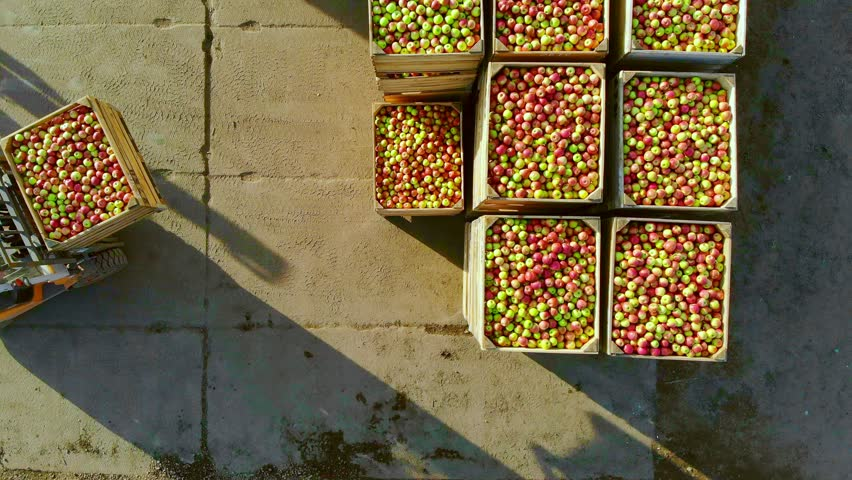 fresh picked apple harvest on farm. small loader, forklift truck, machine loads, put large wooden boxes, bins full of ripe red and green apples on top of each other. top view, aero video.