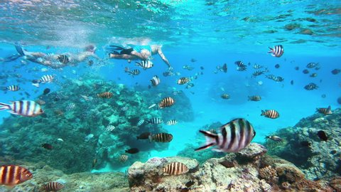 Underwater - Adult couple snorkeling and seeing beautiful corals and tropical fish in Bora Bora