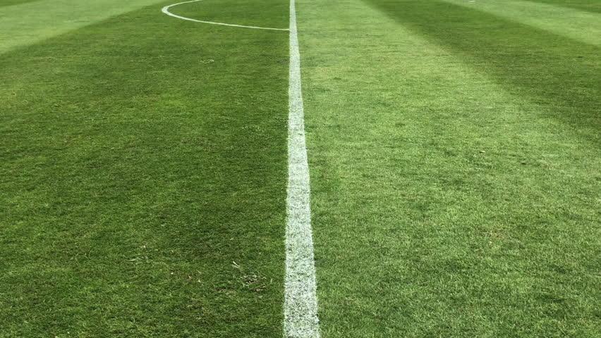 Soccer field grass, Football field grass #1019615002