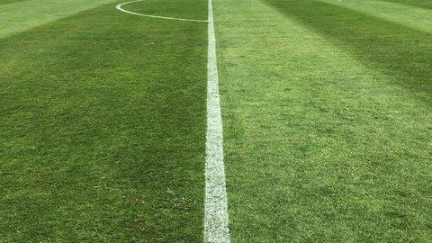 Soccer field grass, Football field grass