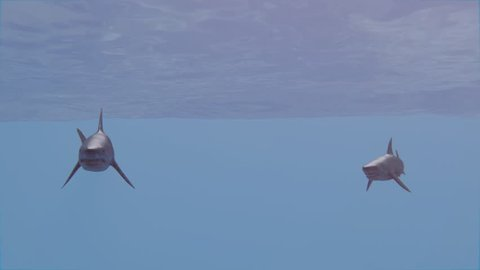 Three Great White Sharks with Attack. High-quality 3d animation.