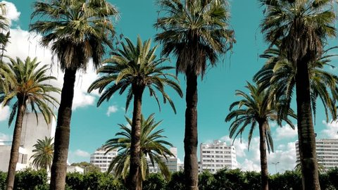 low angle view of palm trees against sky - Pan mode