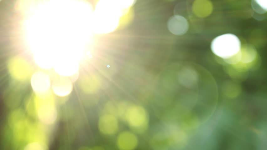 Defocus, nature background. | Shutterstock HD Video #1020894082