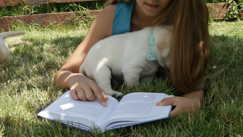 Girl lying on the grass trying to read and playing with labrador puppies in the shade