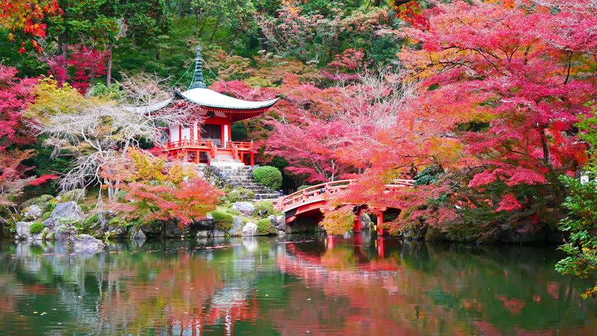 Daigo-ji temple with colorful maple trees in autumn at Kyoto,Japan | Shutterstock HD Video #1021470322