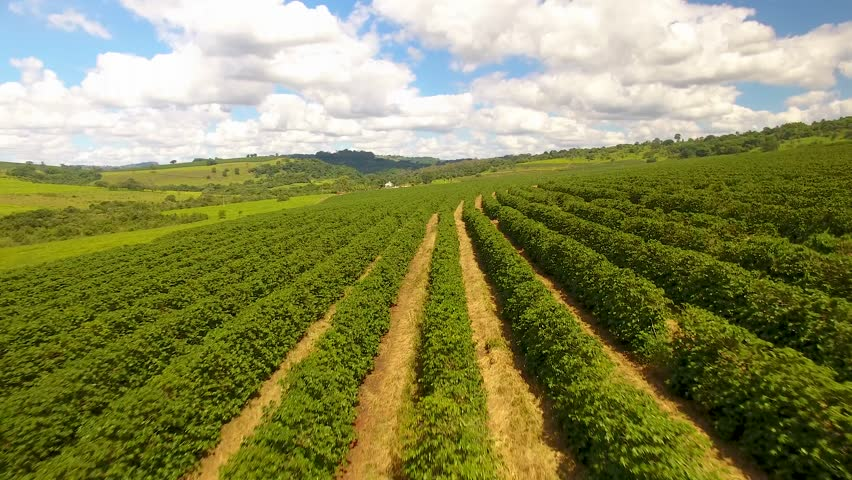 Aerial view of a large brazilian farm with coffee plantation.