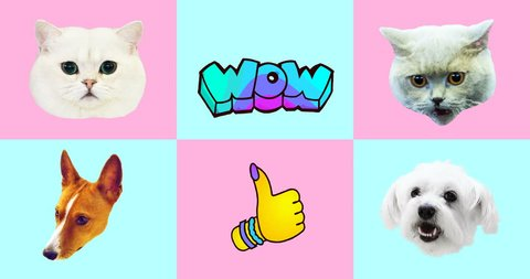 Animation gif set. Funny Animals. Cat and Dog gif faces