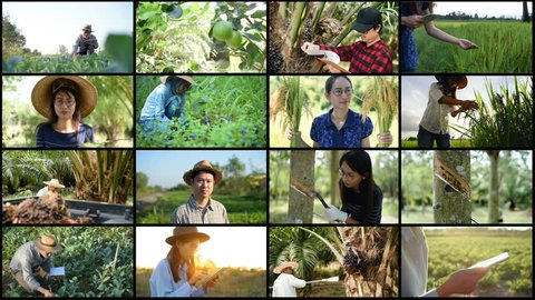 agriculture montage, People Harvesting Fruits and vegetable.