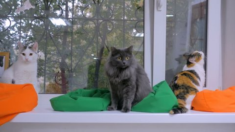 Group of cats sitting on windowsill and looking out of window at modern cat cafe