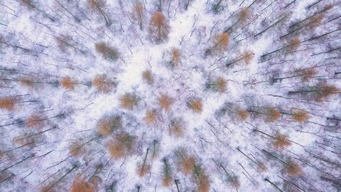 Winter aerial forest seen from above - 4k footage. Top down aerial forest.