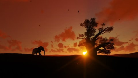 African elephant walking towards a baobab tree agains beautiful sunset, zoom out