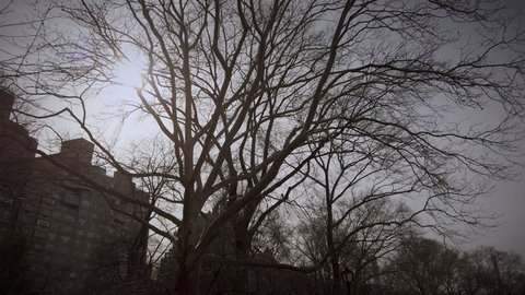 Sun shining through branches of a tree in Central Park. Poetic POV walking shot in Central Park on a gimbal / steadycam. Smooth motion forward.