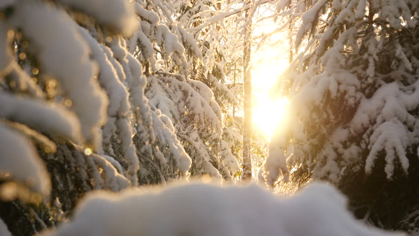 Snowy winter trees. Snowy forest on winter time, Sun shines in winter woods. Sunlight in forest. Sun shine through tree branches covered with snow. Winter background | Shutterstock HD Video #1023824422