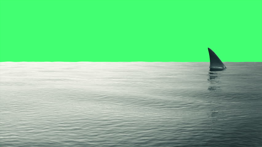 4K Animation of Shark Fin in the Sea on Green Screen or Chroma Key background
